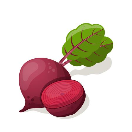 Beet isolated on white. Vector illustration