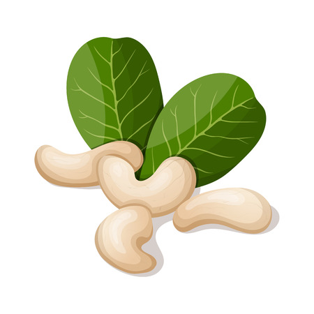 Cashews with leafs isolated on white. Vector illustration.