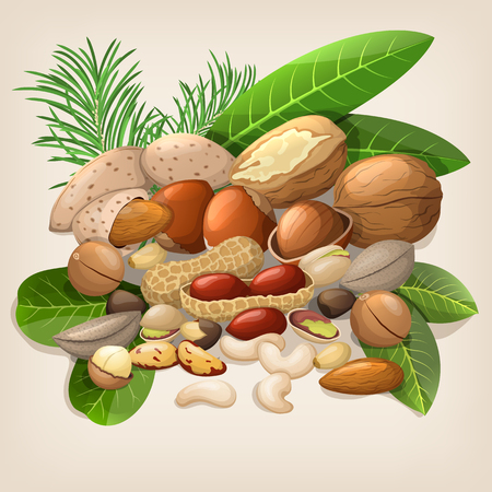 raw food: Nut collection with raw food mix. Vector illustration