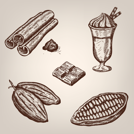 cacao: illustration of cacao beans, chocolate, cup of hot chocolate, cinnamon. illustration