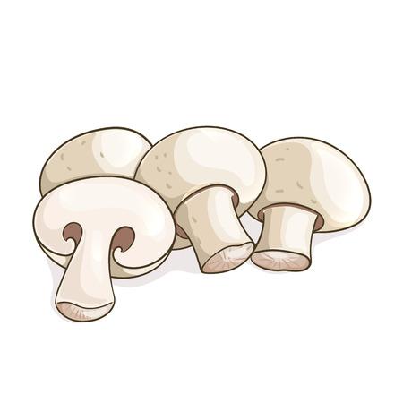 champignon: White champignon mushrooms. illustration