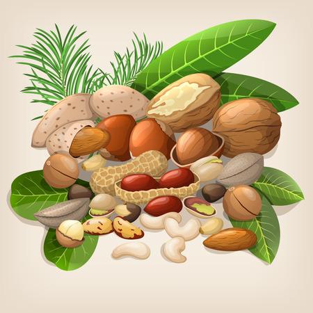 macadamia: Nut collection with raw food mix. illustration Illustration