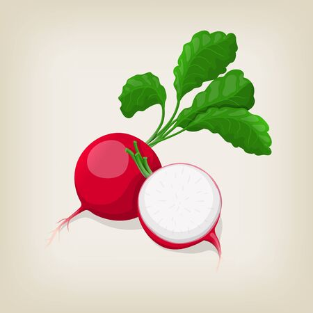 Whole and half radishes with leaves. illustration.