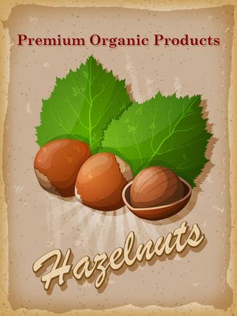 nutmeg: Hazelnuts vintage poster. Vector illustration.