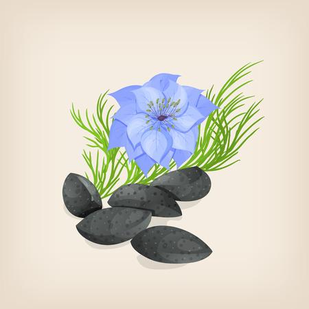 Nigella sativa or fennel flower, nutmeg flower, black caraway, Roman coriander, black cumin, black sesame, blackseed, black caraway, Bunium persicum.