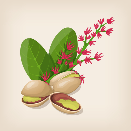 Pistachio nut in shell, flower and leaves.