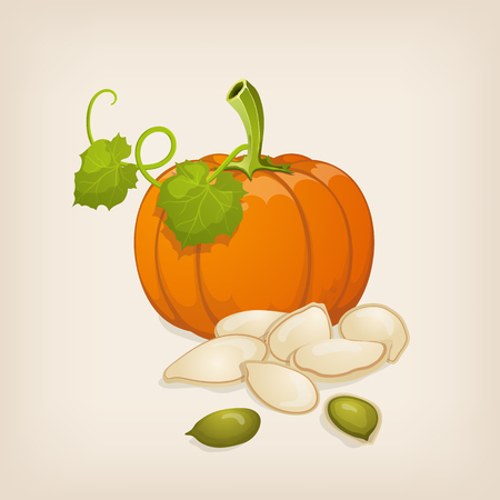 pumpkin seeds: Pumpkin and pumpkin seeds. Illustration