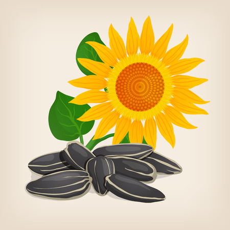 Yellow sunflowers and sunflower seeds.