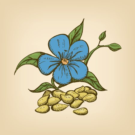 flax seed: Dried seeds of golden flax with flowers.