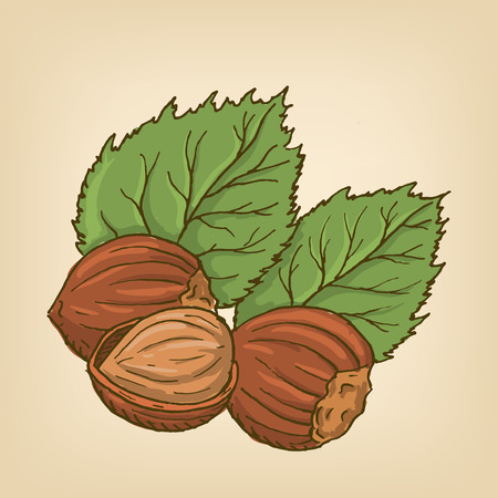 nutty: Hazelnuts with leaves. Illustration