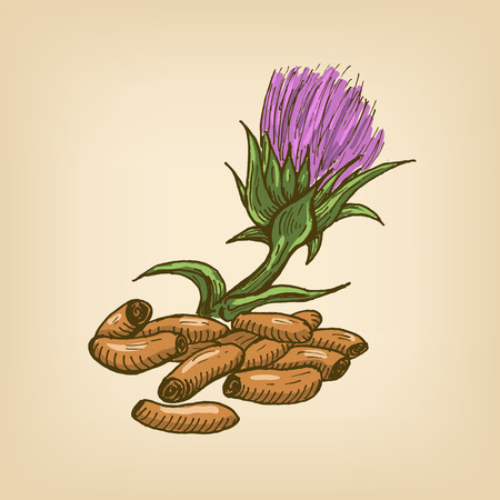 hepatitis prevention: Seeds of a Milk Thistle with flower. Hand drawn illustration.
