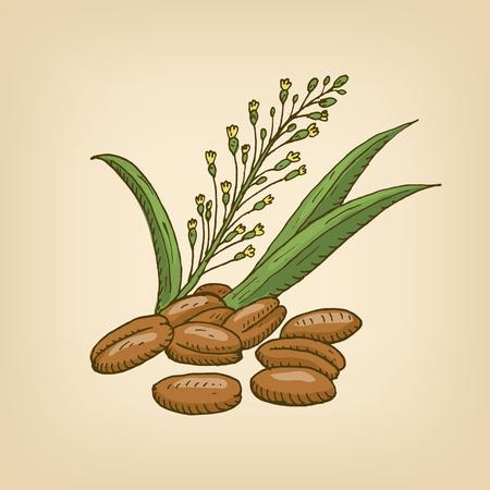 flax seed: Camellia sativa or gold-of-pleasure, or false flax, flowering oil plant. Hand drawn illustration.