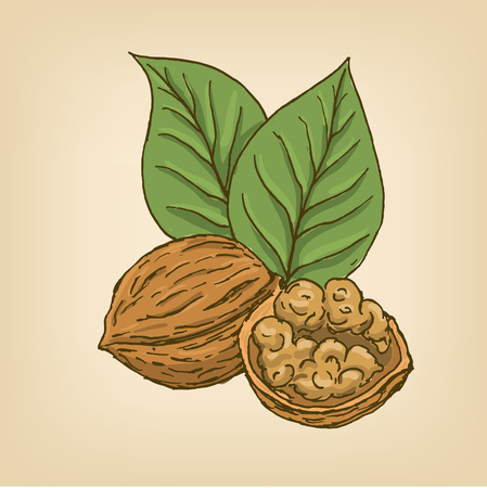 Walnuts with leaves and kernel walnut.