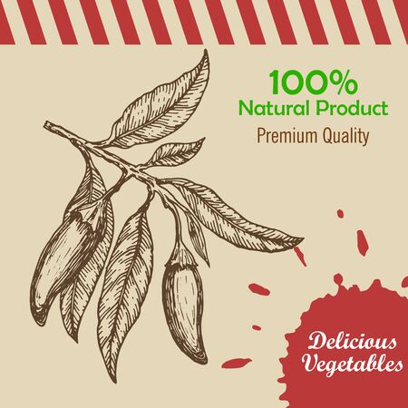 capsaicin: Hand drawn chili paper. Template for restaurant, cafe, bar or fast food poster, brochure or flyer. Mexican restaurant poster, food brochure or menu template. Vector illustration.