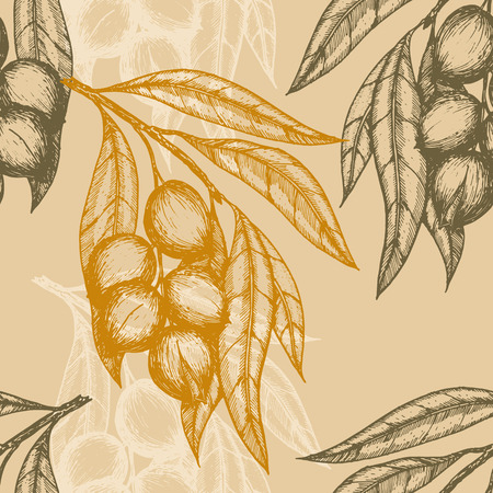 macadamia: Seamless pattern based on engraving illustration of macadamia branches with nuts and leaves. Vector illustration Illustration