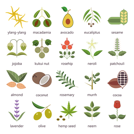 Set of herbs and plants color flat icons used in cosmetics and natural medicine. Vector illustration 向量圖像