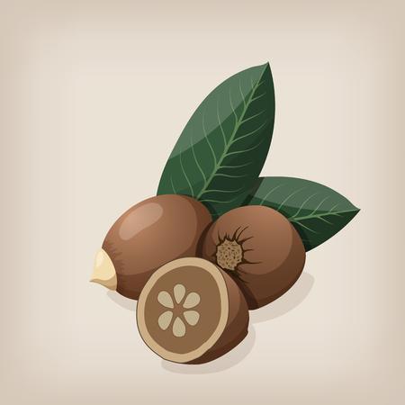 Babassu seeds with leaves. Vector illustration.