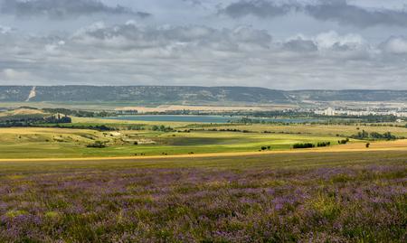 Lavender field in sunlight in the Crimea. Stock Photo