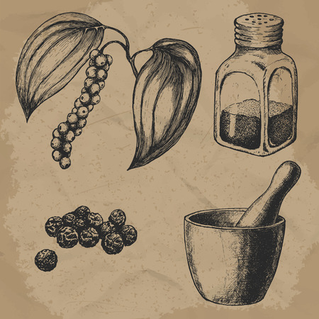 Black pepper, plant and seeds. Hand mortar with a pestle. Glass pepper. Vintage hand-drawn vector set for design. EPS10.