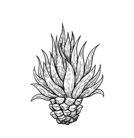 Handgezeichnete blaue Agave, Tequila-Hauptbestandteil, Skizzenart-Vektorillustration lokalisiert auf weißem Hintergrund. Schwarz-Weiß-Zeichnung von Agavenkaktus, Seitenansicht, farbenfrohe Illustration Vektorgrafik