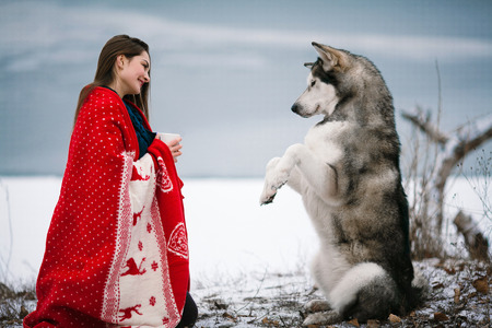 execute: Girl with alaskan malamute dog wrapped  in white-red blanket. They sit near winter lake. Dog training. Dog performs command.
