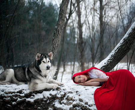 Girl in costume Little Red Riding Hood with dog malamute like a wolf.  She sleeps in forest on a tree near dog.