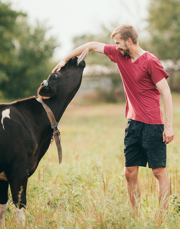 he: Smiling young man plays with black cow on meadow. He caresses her head and cow licks his hand.