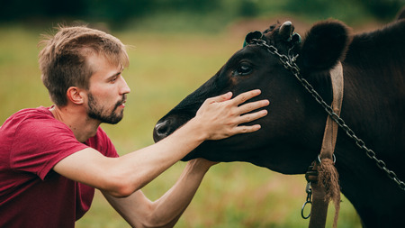Portrait of young man caressing black cow on head. Side view.