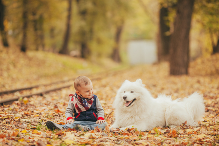 Little boy sits next to samoyed dog among yellow fallen leaves in autumn park.