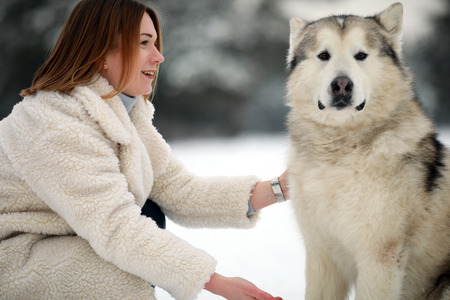 Portrait of a girl next to a dog Alaskan Malamute for a walk in winter.
