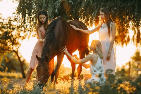 Three young women are next to the brown horse under the tree at sunset. Backlight.