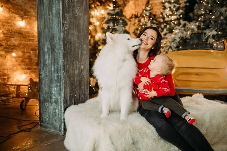 Mother and her son sit next to white samoyed dog and have a fun against background of Christmas tree and decorations. Zdjęcie Seryjne - 136098820