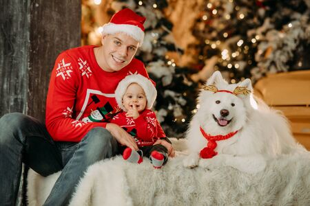 Father and little son in Santa Claus hats sit next to white samoyed dog against background of Christmas tree and decorations. Zdjęcie Seryjne