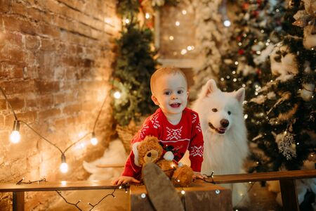 Little boy has a fun next to white samoyed dog against background of Christmas tree and decorations. Zdjęcie Seryjne - 136099035