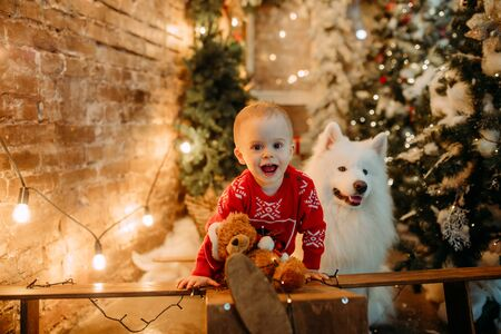 Little boy has a fun next to white samoyed dog against background of Christmas tree and decorations. Zdjęcie Seryjne