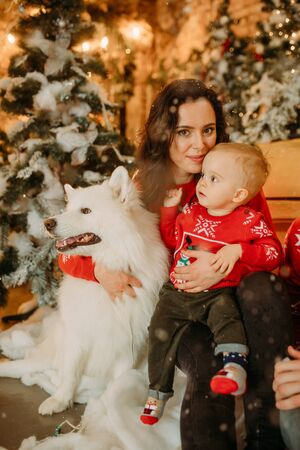 Mother and her son sit next to white samoyed dog against background of Christmas tree and decorations. Zdjęcie Seryjne - 136099098