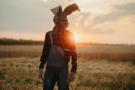 Man in image of sorcerer in hat with rabbit ears stands among wheat field against sunset sky. Standard-Bild
