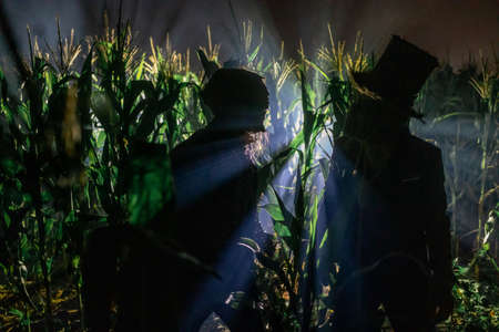 Two undead zombies stand at the edge of a cornfield at night.
