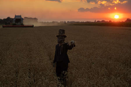 Man in image of sorcerer in hat performs black magic ritual and portrays hanged man among wheat field against sunset sky and harvester. Stock fotó
