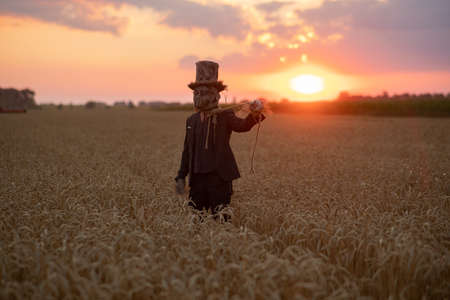 Man in image of sorcerer in hat performs black magic ritual and portrays hanged man among wheat field at sunset.
