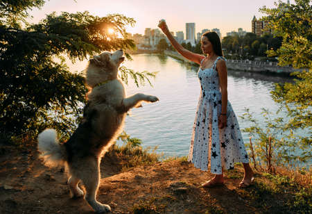 Young woman plays with Malamute dog and feeds it by ice cream in park against background of river and city at sunset.
