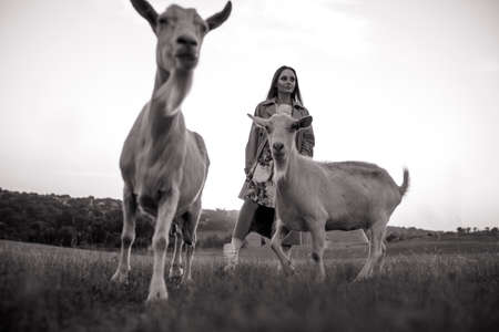 Handsome female shepherdess walks in a pasture among a herd of goats. Black and white image.