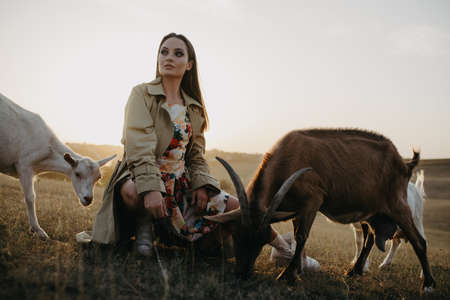 Handsome female shepherdess sits in a pasture among a herd of goats at sunset.