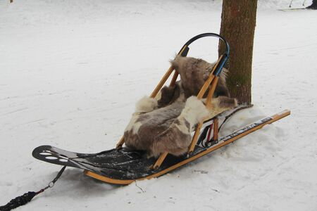 Sled for a dog team with a deer skin stands near a tree in the winter in the snow. 스톡 콘텐츠