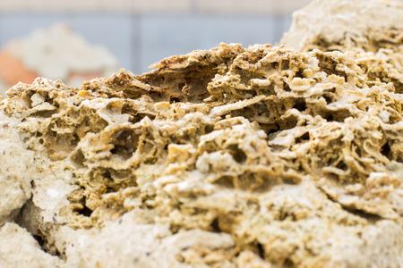 texture Rakushnjak or coquina. Bricks Stone Sand selling of fossil corals, sponges, shells, rapanov, spongy surface. horizontal shot Stock Photo
