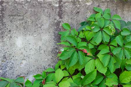 green plant and a concrete wall