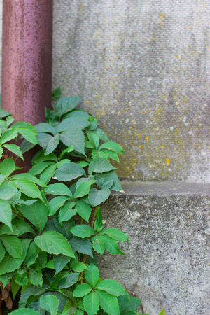 crack: green plant and a concrete wall