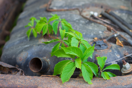 branch of green plants and car wheel to the chassis of an old rusty abandoned car