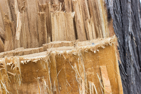 cutting: texture broken wood as the photo shows the structure of tree bark. close up of wood slivers after cutting