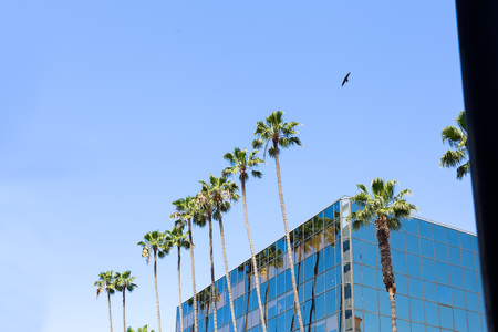 Tall building in Hollywood and a palm tree on a blue sky background and a bird is flying